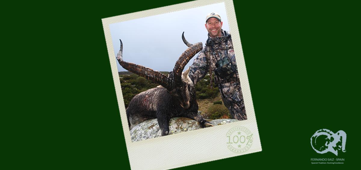 gredos-ibex